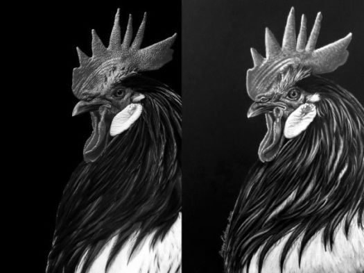 Values are key to drawing vibrant color on black paper. The darks must be dark enough to make the light values pop.