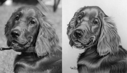 How to Draw an Irish Setter - Check values by converting the drawing and reference photo to black and white and then comparing them.
