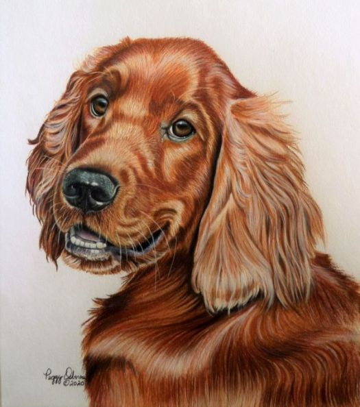 How to Draw an Irish Setter - The Finished portrait.