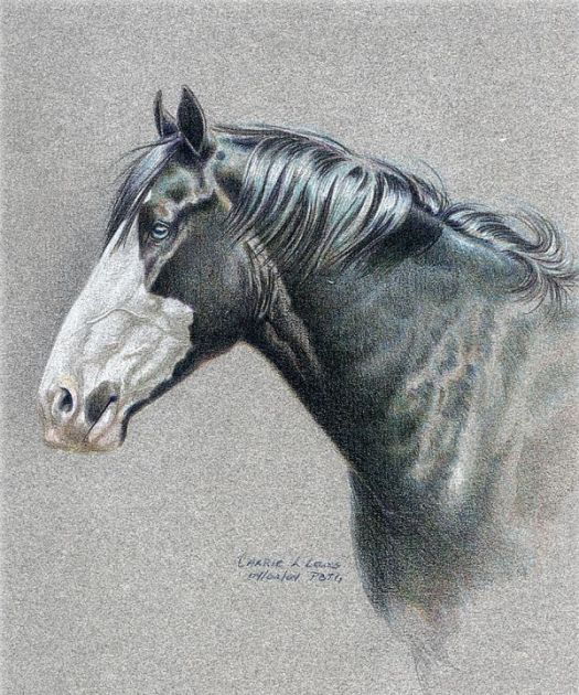 Drawing Vibrant Highlights with Colored Pencil - Use White Paper