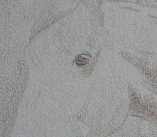 Start a miniature horse drawing.