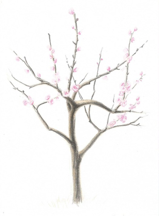 How to Draw a Flowering Tree