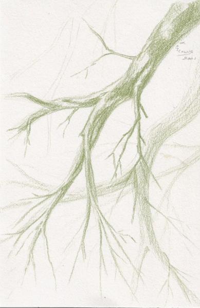 Weekly Sketch Along Tree Bones in Green