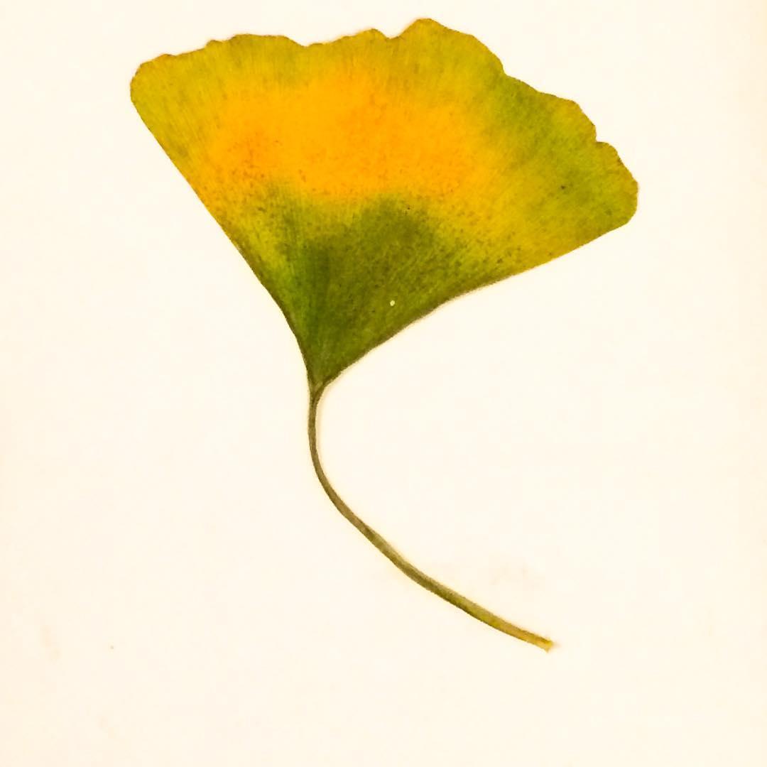 Ginkgo leaf gift from quitecontrarypress mycolor smallgiftsarethebest gingko fallcolors carrielederer