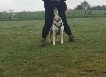 dog training middle