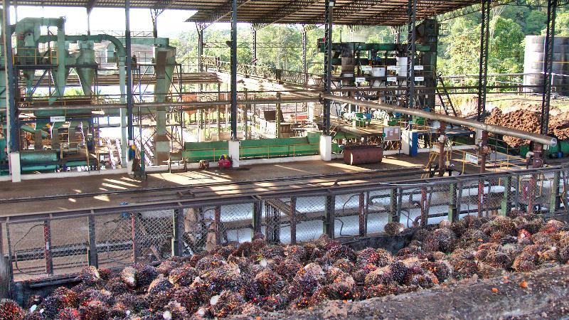 Procesadora de aceite de palma en Ecuador.