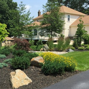 The Pros of Perennials Carroll Landscaping