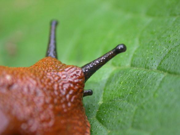 Dealing with slugs