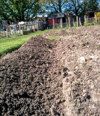 potato mound up rows close up
