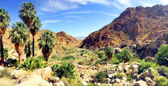 Forty-Nine Palms Oasis Trail - Joshua Tree National Park