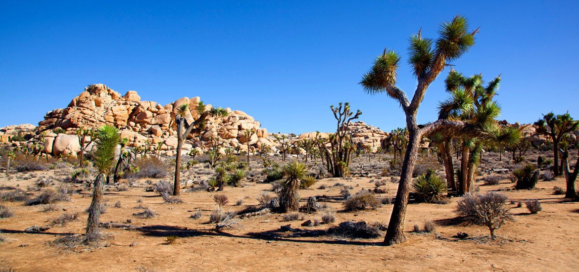 How to Discover the Best of Joshua Tree in a Weekend
