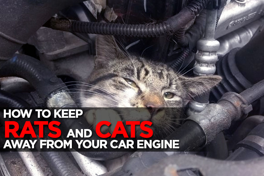 Keeping Rats and Stray Cats Away From Your Car Engine