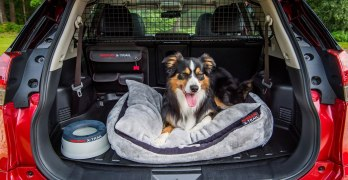 Nissan X-Trail PAW PACK makes the X-Trail a Dog Friendly SUV (video)