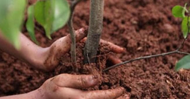 piantumazione_alberi
