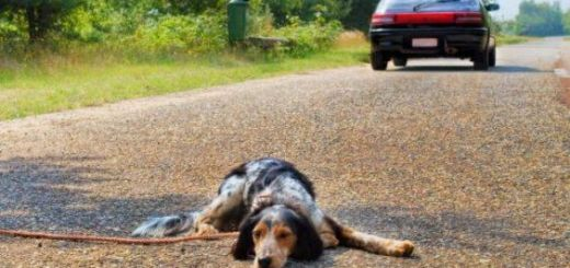 cane_abbandono-animali