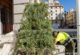 Jardineras en la Plaza del Ayuntamiento