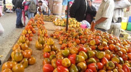 Disfrute del Mejor Pejibaye en la Feria Nacional de Tucurrique