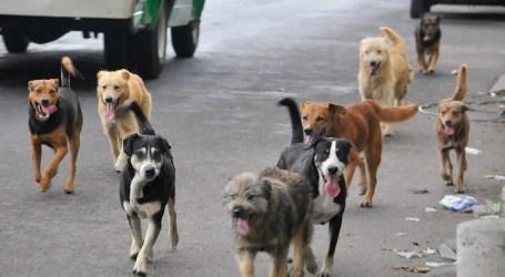 Municipalidad de Cartago construirá primer centro de atención de caninos