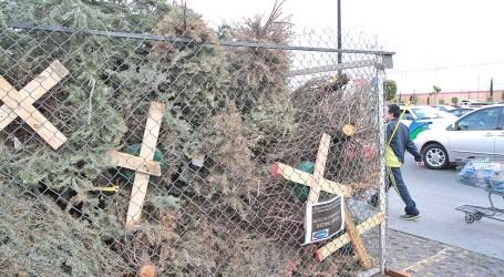 Iniciativa busca reciclar árboles de navidad en enero