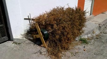 Municipalidad de Cartago recibirá árboles navideños