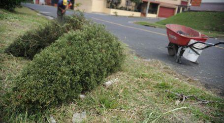 Inicia campaña de reciclaje de árboles navideños