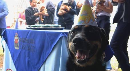 Centro Municipal de Educación para el Cuido Animal de Cartago ha atendido a 670 perros de la calle