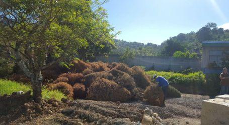 Municipalidad de Oreamuno recibirá árboles de navidad