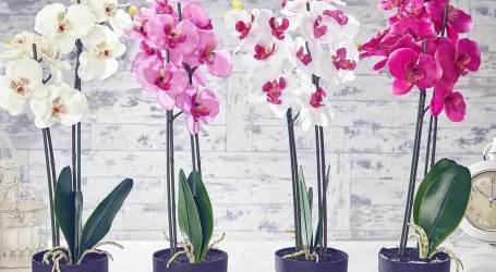 Exposición de orquídeas y robótica este fin de semana en Cartago