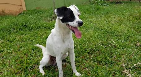 41 perros romeros esperan ser adoptados