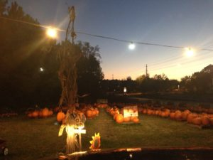 sumc_pumpkins
