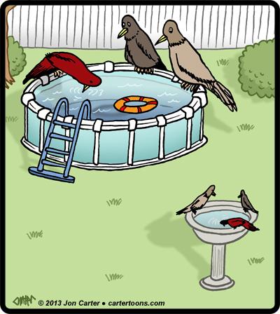 BirdBathPool