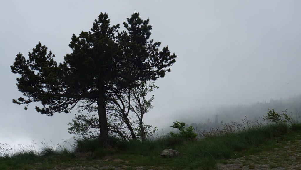 Purée de pois sur le Mont Aigoual