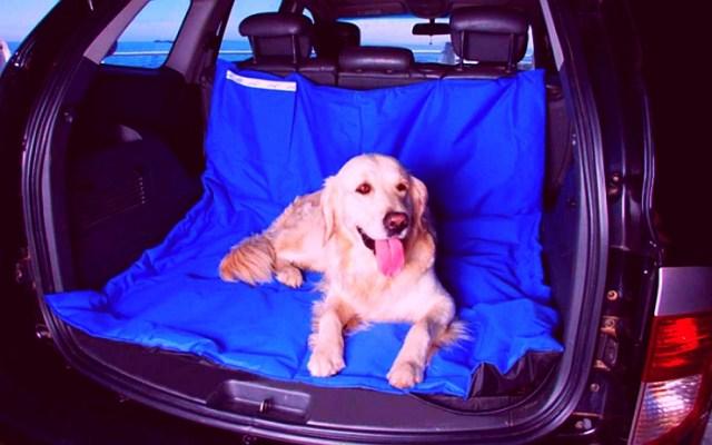 A comfortable dog seat