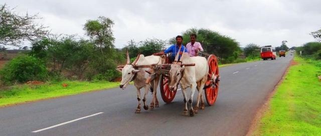 Bullock Cart on Indian Highway