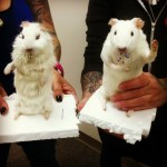 Fine Art Taxidermy Workshop at The Hive, Sept 26