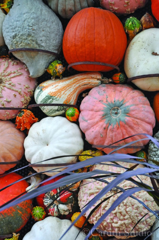 detail of a gourd display with purple fountain grass