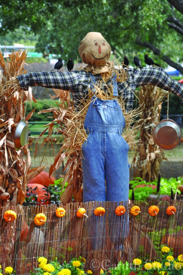 happy scarecrow in pumpkin, hay, corn, and flower display