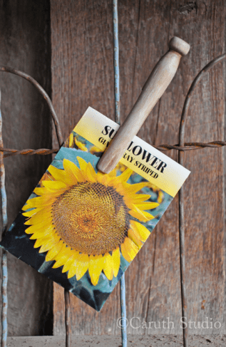Clothes peg holding seed packet