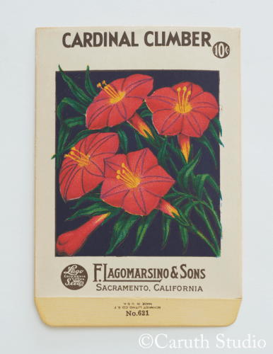 Vintage cardinal climber seed packet