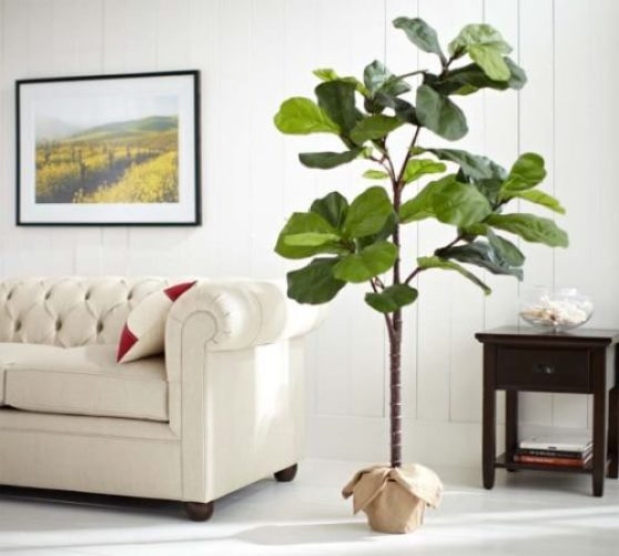 Faux Potten Fiddle Leaf Tree