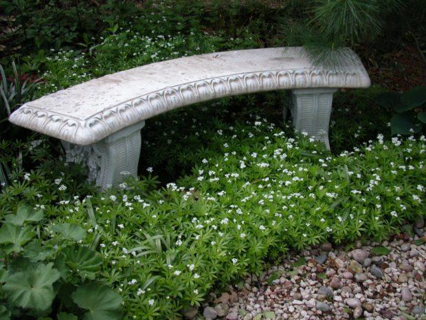 Galium odoratum around a stone bench