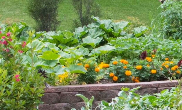 veggies in raised bed