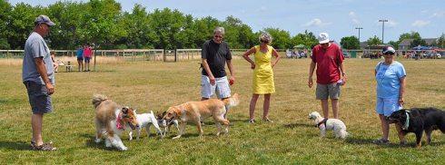 Image result for images of dog park