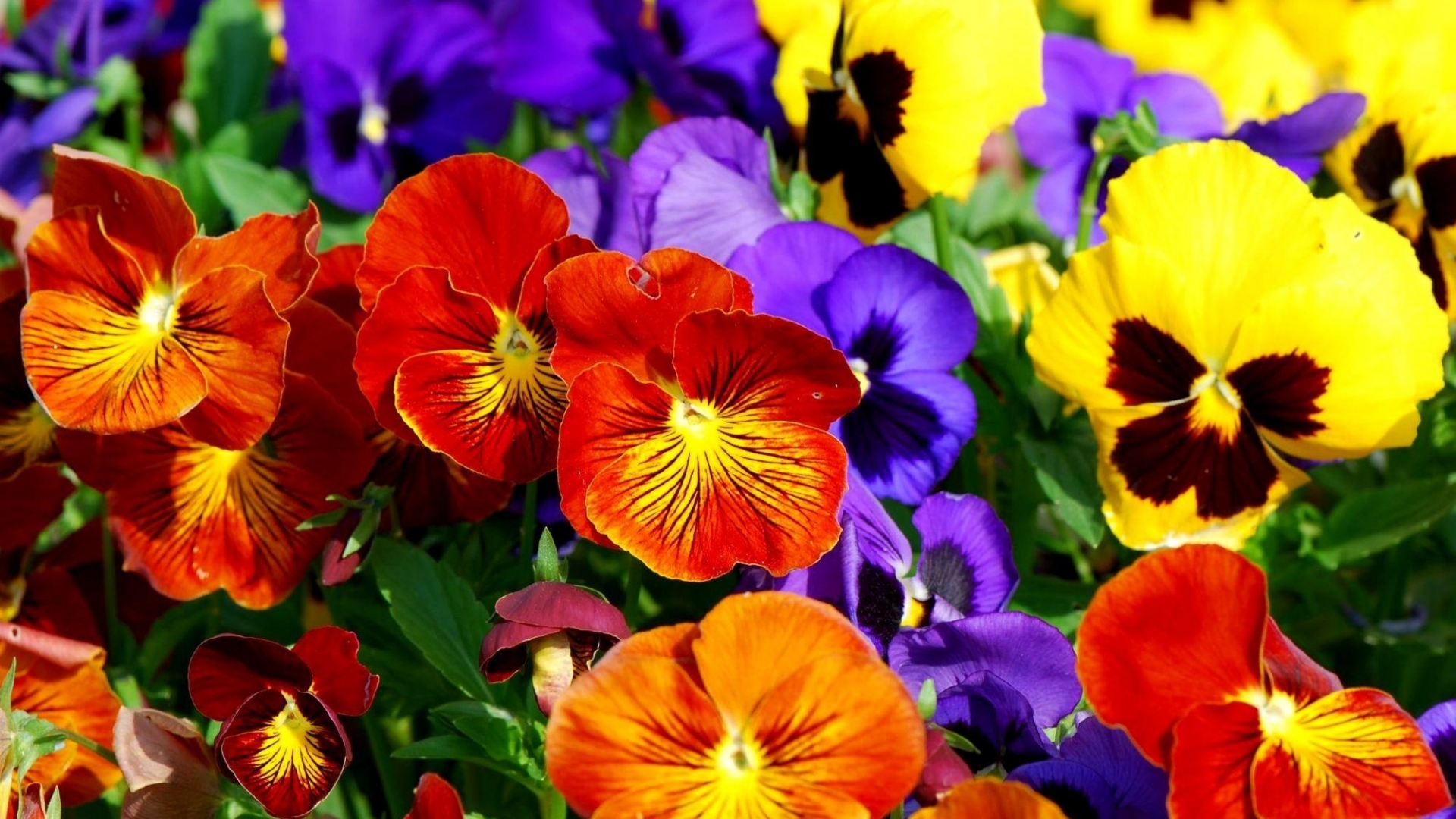 773013-colorful-flowers-wallpaper – Casa Pacifica