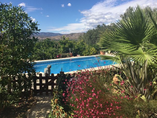 Het zwembad van Casa Amigo
