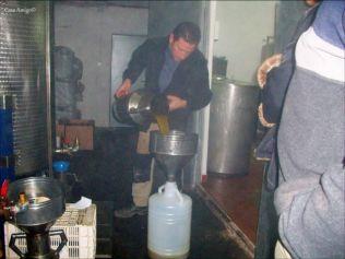 Olijvenpluk Casa Amigo