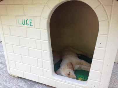 Luce dorme nella sua cuccia