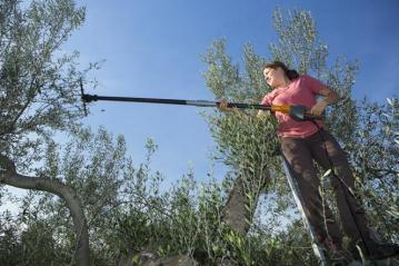 Volunteers raking the trees