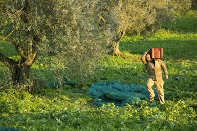 Portando il raccolto