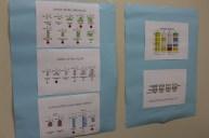 Estudando as proteínas (1)